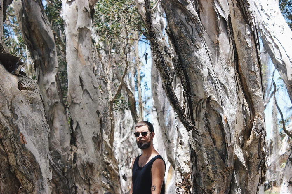 Árvores australianas de fazer rolha de vinho, na casa da ricona